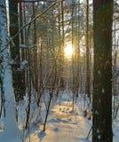 над зимой валов снежка съемки ландшафта пущи стоковые фото