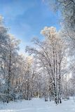 над зимой валов снежка съемки ландшафта пущи стоковое фото