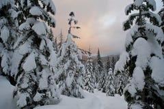 над зимой захода солнца пущи облаков Стоковые Изображения