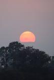 над индийским заходом солнца джунглей Стоковое Изображение RF