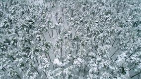 Над лесом зимы акции видеоматериалы