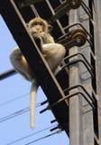 над обезьяной стоковая фотография