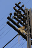 над обезьяной Стоковые Изображения
