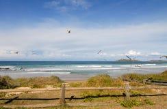 над чайками моря Стоковое Изображение RF