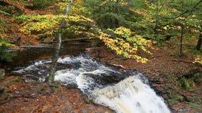 Над Ganoga падает в †«Ricketts Глен Пенсильванию петли осени сток-видео