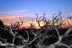 над zion восхода солнца Стоковые Изображения
