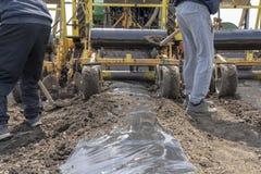 2 наемного сельскохозяйственного рабочего работая за трактором - пластмасса мульчирует класть кровати стоковое изображение