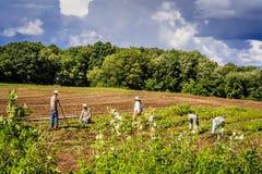 Наемные сельскохозяйственные рабочие в полях Стоковое Фото