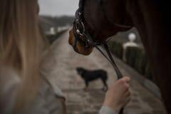 назад девушки с пребыванием лошади на мосте с собакой Лес на предпосылке стоковое фото