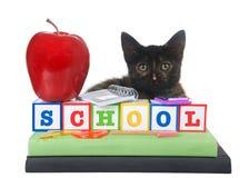 Назад к котенку школы Стоковые Изображения