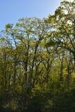 Назад-освещенная роща Стоковая Фотография RF