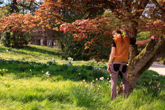Назад склонности человека против дерева в парке Стоковое Фото