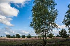 Назначение туриста Германии вереска Lueneburg природного заповедника ландшафта осени северное Стоковая Фотография RF