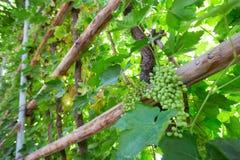 Назначение шелкового пути двор и ром виноградины стоковая фотография rf
