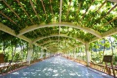 Назначение шелкового пути двор и ром виноградины стоковая фотография