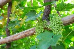 Назначение шелкового пути двор и ром виноградины стоковые фотографии rf