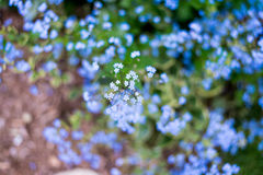 Назовите неизвестные цветки на стороне дороги весной Стоковая Фотография