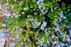 Назовите неизвестные цветки на стороне дороги весной стоковое изображение
