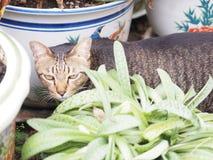 Найдите еда в саде от черного тайского денежного мешка Стоковое фото RF
