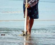 Найдите моллюск Стоковое Изображение RF