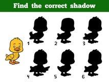 Найдите правильная тень Маленькая утка Стоковое фото RF