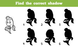Найдите правильная тень (рыбы) Стоковое Изображение RF