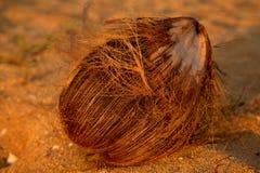 накалять кокоса Стоковые Фото