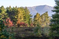Накаляя листва на деревьях в болоте Стоковые Фото
