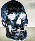 Накаляя череп Стоковые Фото