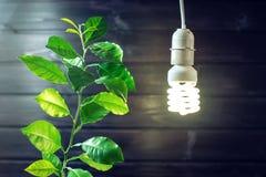 Накаляя электрическая лампочка и зеленый росток молодого дерева Стоковое Изображение RF