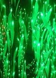 Накаляя листья зеленого цвета Стоковые Изображения RF