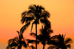 Накаляя оранжевый заход солнца и пальмы Стоковые Изображения