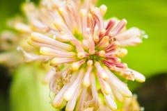 Накидка хорошего цветка надежды стоковая фотография