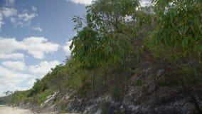 Наклон вниз снял деревьев для того чтобы пристать к берегу видеоматериал