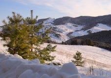 Наклон горы за небольшими елями стоковая фотография rf