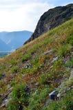 Наклон горы покрытый с травой Долина реки Chulyshman, Altai стоковая фотография rf