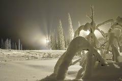 наклон катания на лыжах ночи стоковая фотография