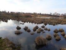 Накопления сухой травы в болотистом реке стоковое фото