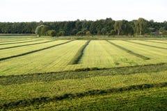 Накошенная трава в поле Стоковые Изображения RF