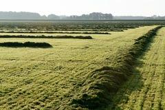 Накошенная трава в поле Стоковое Фото