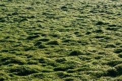 Накошенная трава в поле Стоковое Изображение