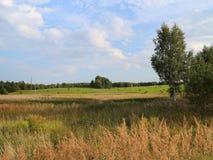 накошенная трава стоковые фото
