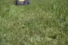 накошенная трава Стоковые Изображения RF