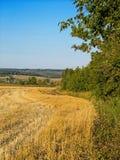 Накошенное поле в дневном свете Стоковая Фотография