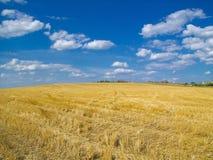 Накошенное поле, голубое небо Стоковые Фотографии RF