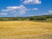 Накошенное поле с голубым небом Стоковая Фотография RF
