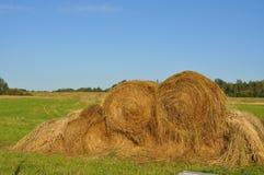 Накошенное сено в луге, солнечный день стоковые изображения rf