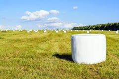 Накошенное сено в упаковывая поле Стоковое Изображение RF