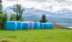 Накошенное сено упаковало в розовых и голубых связках полиэтилена на поле стоковое фото rf