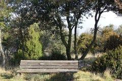 Накрените в лесе для того чтобы увидеть взгляды Стоковые Фотографии RF